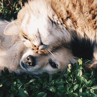 Symptoms, Causes, and Treatment of Leg Paralysis in Dogs